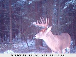 deer30