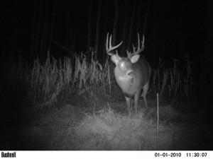deer39