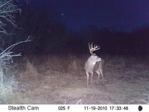 deer44